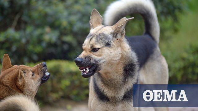 Αποζημίωση 2.000 ευρώ σε γυναίκα για δάγκωμα σκύλου