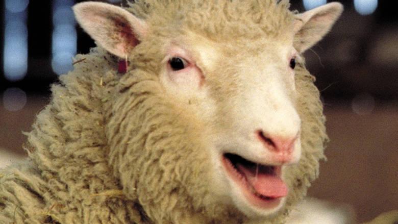 Αποτέλεσμα εικόνας για πρόβατο