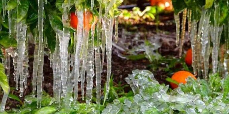Στους -2 το θερμόμετρο στην Αργολίδα: Πάγωσαν πορτοκάλια, δυσεύρετα τα κηπευτικά -Αύξηση στις τιμές