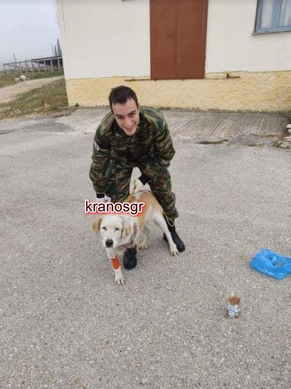 Γιάννενα: Στρατιώτες σώζουν σκύλο από χτύπημα αυτοκινήτου και βέβαιο θάνατο - Εικόνα 2